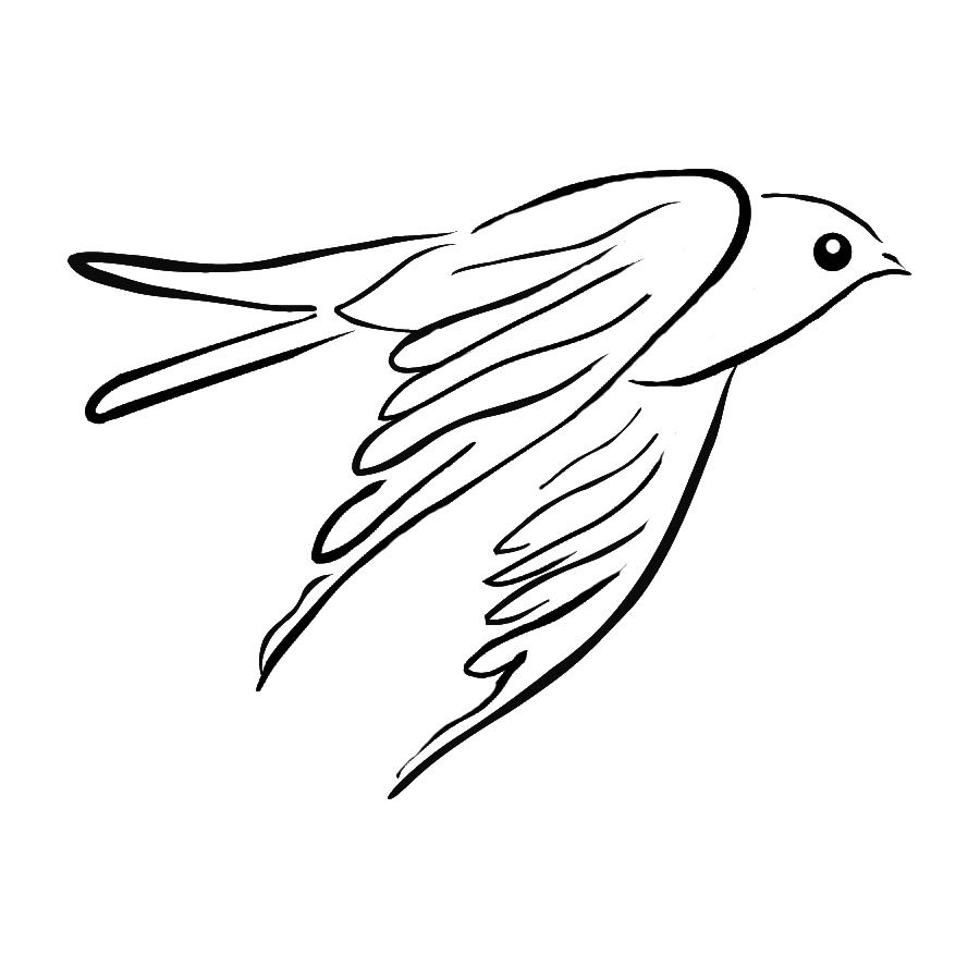 Pencil drawing of bird flying straight